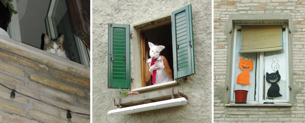 Various cats at the windows