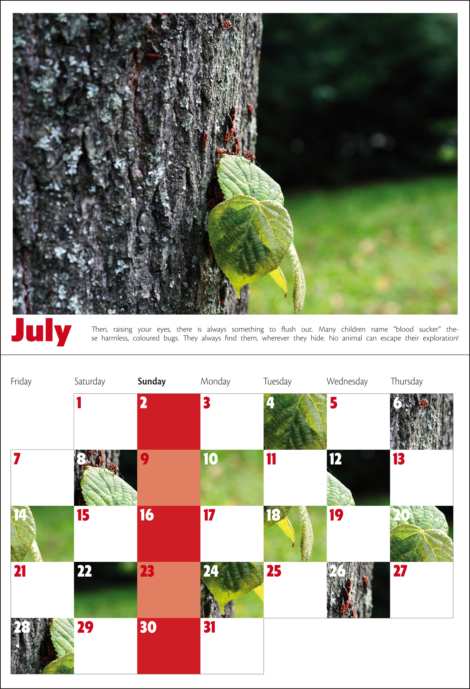 A calendare with pictures' details